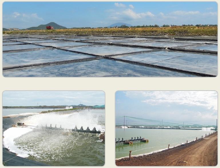 Ứng dụng của màng HDPE trong ứng nuôi trồng thủy sản